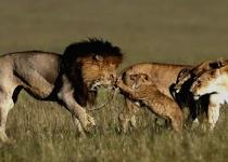 park-of-lions