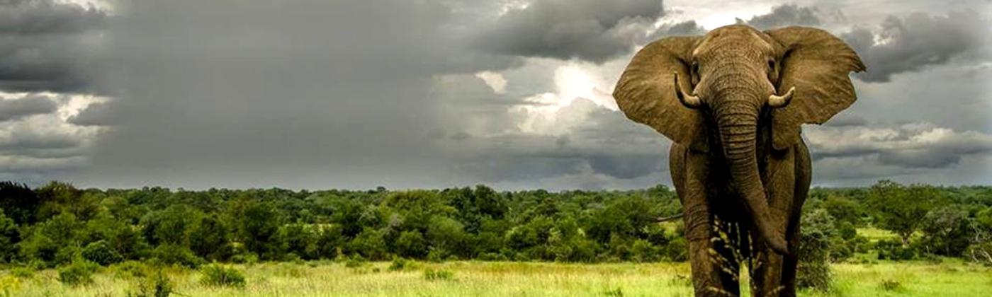 elephant-in-amboseli