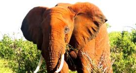Amboseli Budget Sasfari Kenya