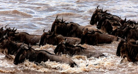 Short Masai Mara Tour